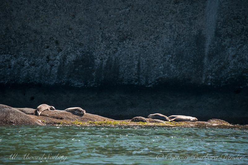 Harbor Seals of Skipjack Island