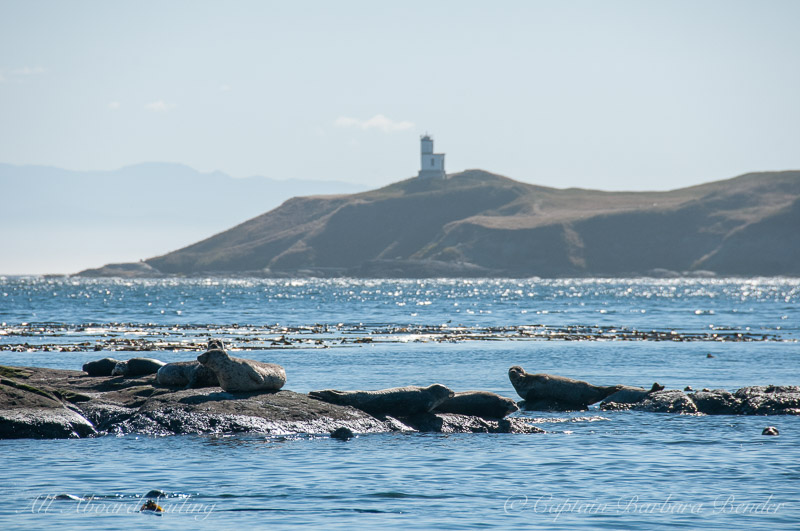 Harbor seals and Cattle Point Lighthouse Tag PhotoAdd Location