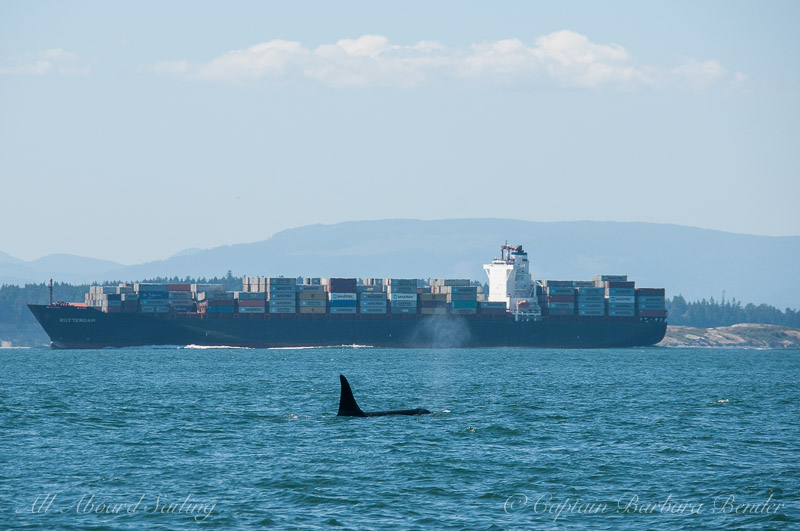 K33 Tika with container ship