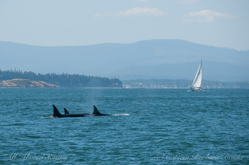 Some of the K12's headed up Haro Strait