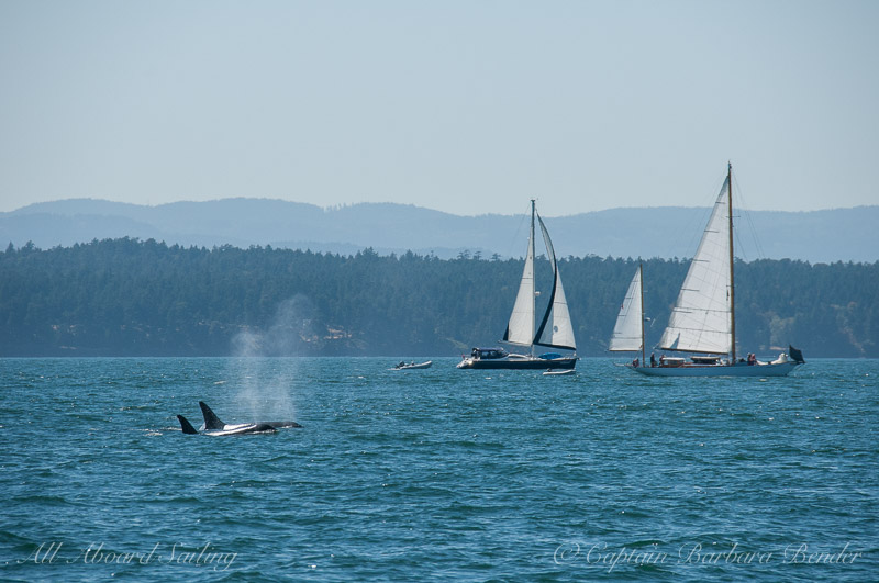 We're not the only ones sailing with whales