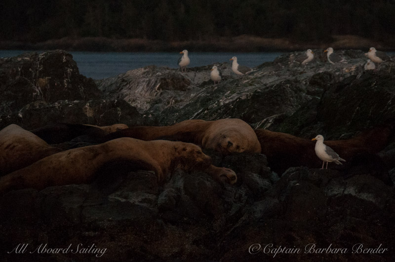 Sea lions catching some Z's