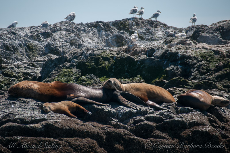 Sleepy Sea Lions - check out the little tiny one
