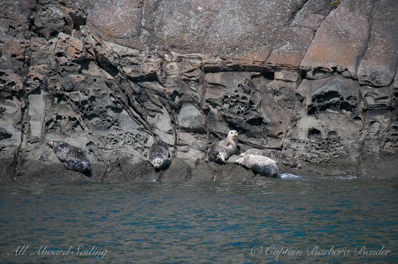 Harbor Seals and honey combed sandstone