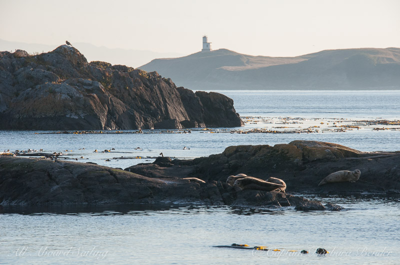 Harbor Seals with Cattle Point Lighthouse in the distance