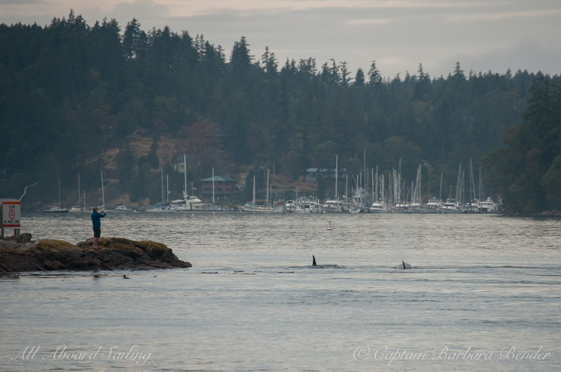 Transients going through Pole Pass - Deer Harbor, Orcas Island in the distance