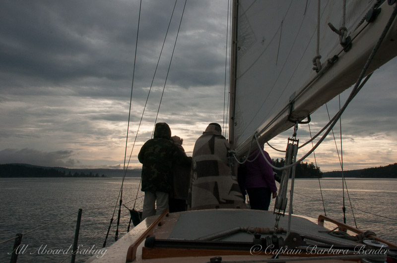 Whale watching sailing in the San Juan Islands