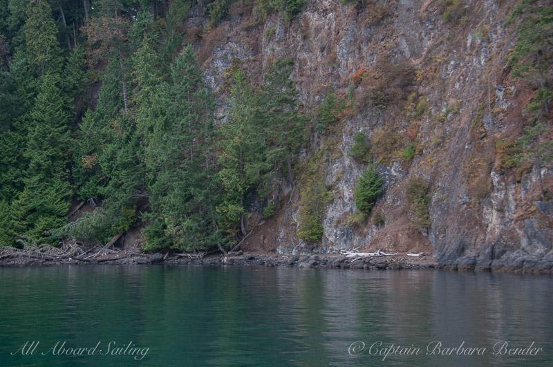 Deer along shoreline of Spieden Island