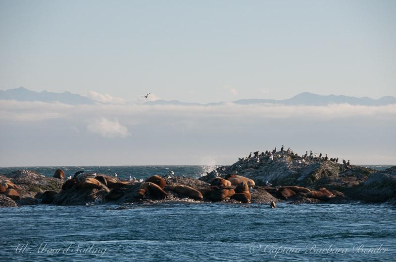 Wildlife on Whale Rocks
