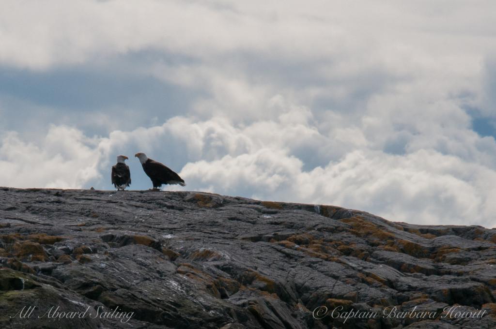 Pair of bald eagles on Mummy Rocks