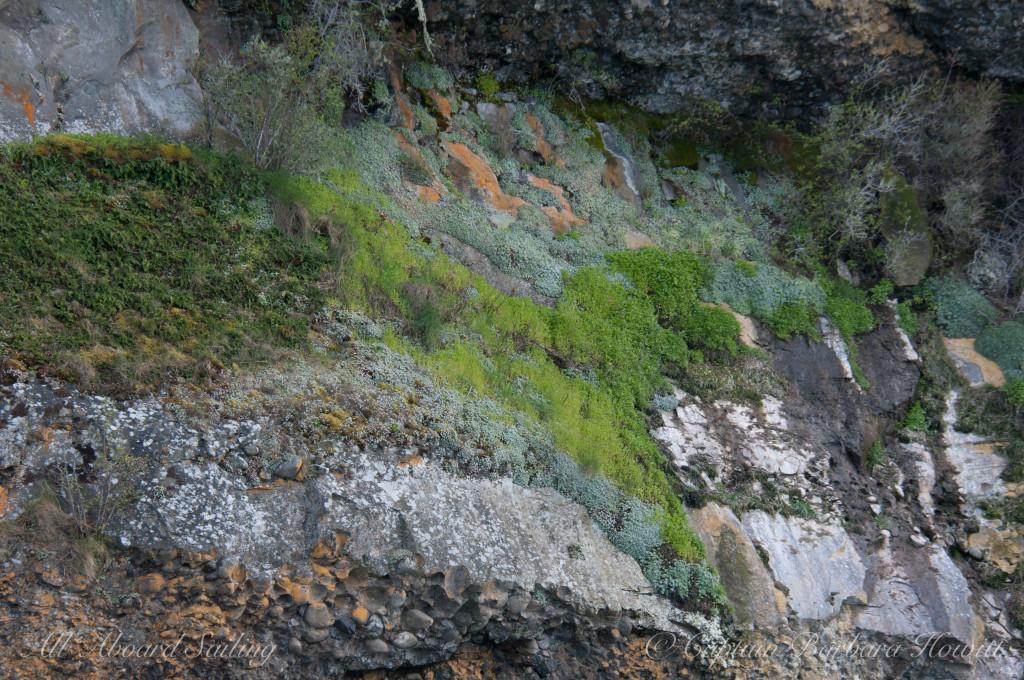 Flattop Island mosses and lichens