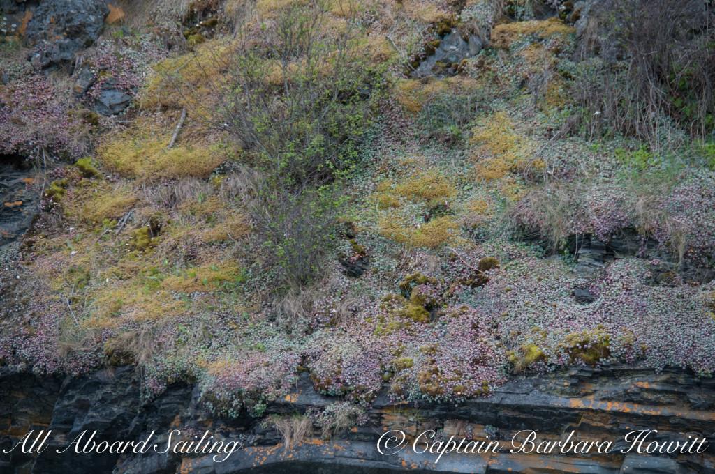 Flattop Island wildflowers