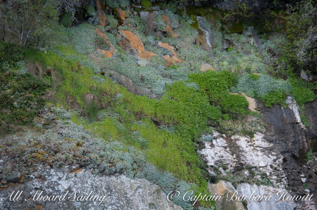 mosses and lichens of Flattop Island