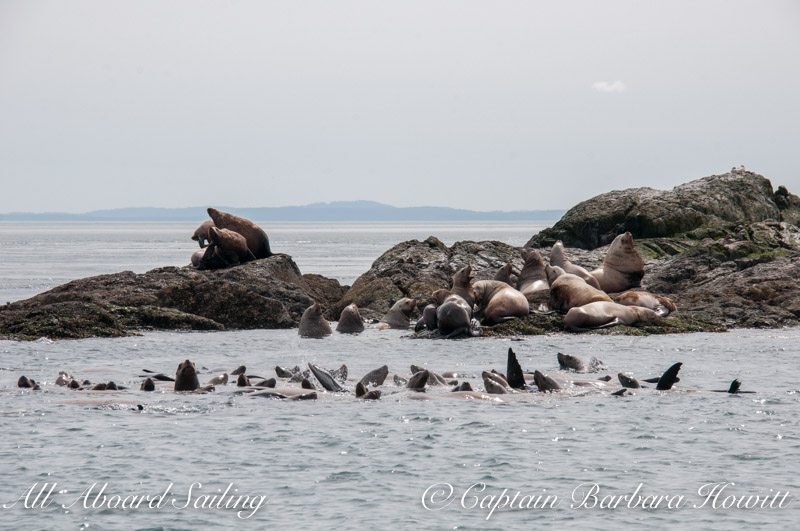 Whale Rocks - steller sea lion town
