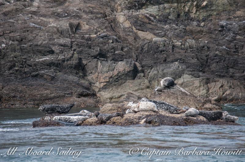 Harbor seals - Colville Island