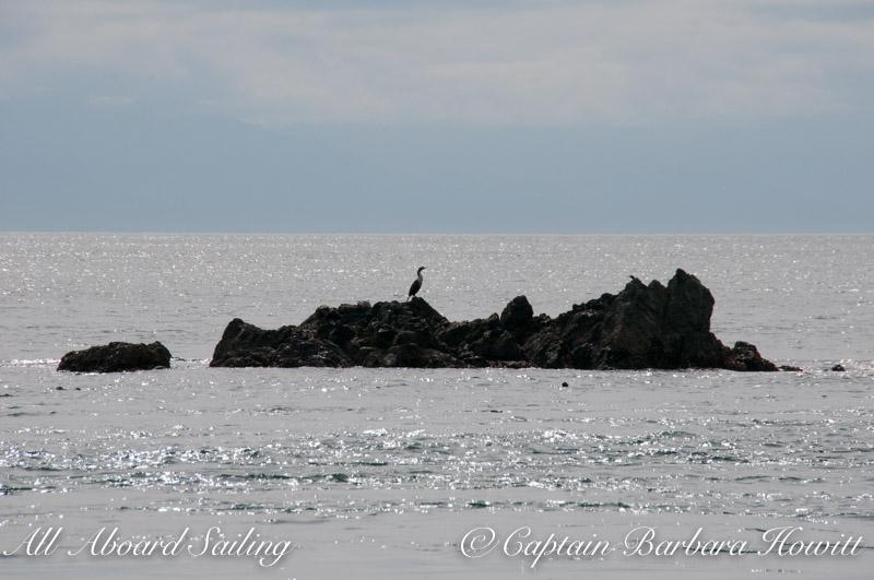 Cormorant silhouette on Swirl Island