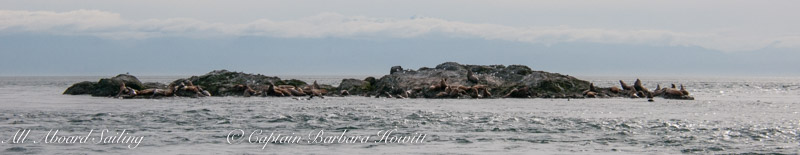 87 sea lions on the north side of the rocks (we counted 50 sea lions in a raft that met us 100 yards to the south)