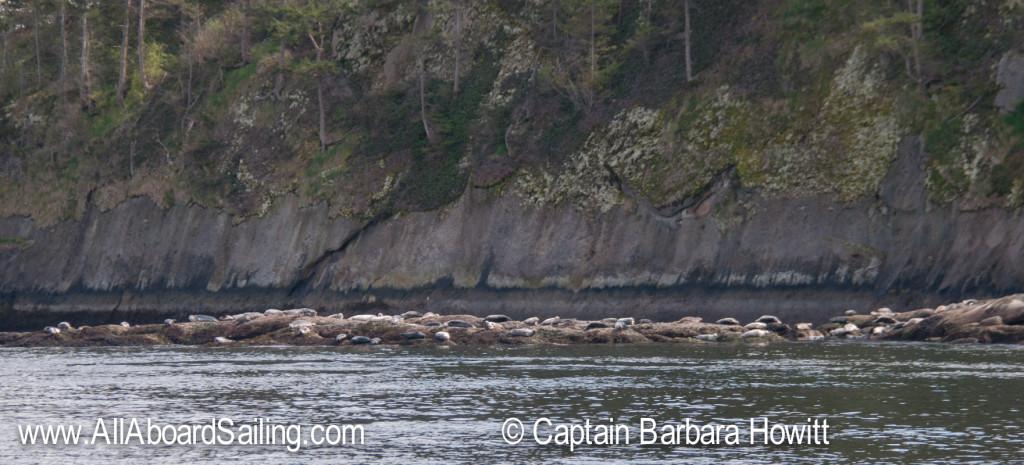 Harbor seals on Skipjack Island