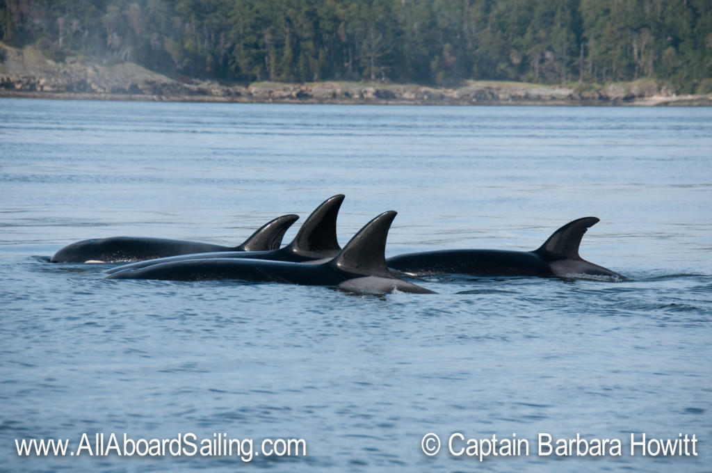 Close socialization of orca families