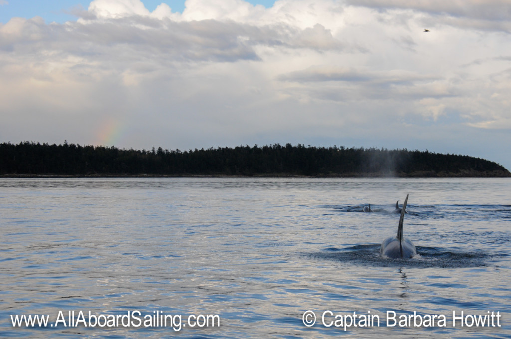 Killer whales and rainbow