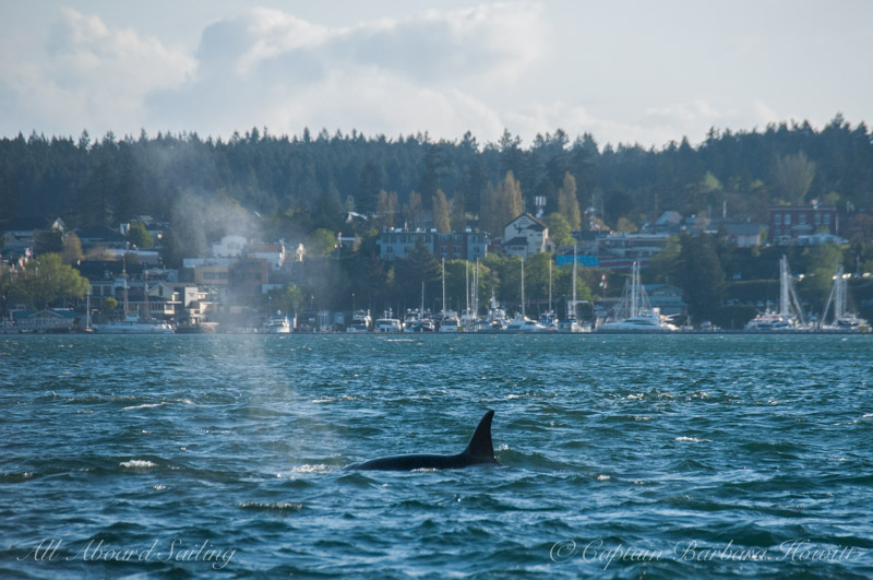 T123 passing The Whale Museum and Friday Harbor