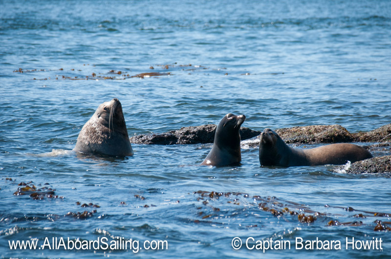 California and Steller sea lions