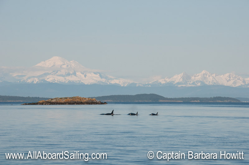 Orcas and Mt Baker