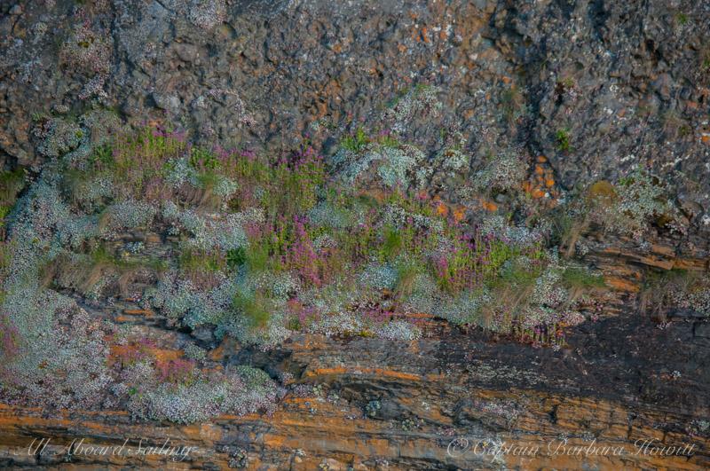 Wildflowers on Flattop Island
