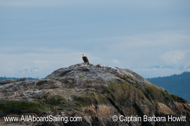 Bald Eagle on White Rock