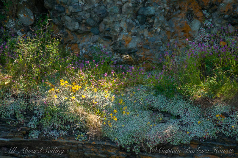 Cliffside Wildflowers