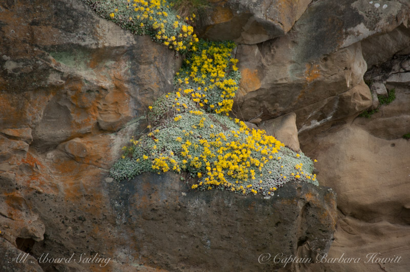 Cliff face wildflowers