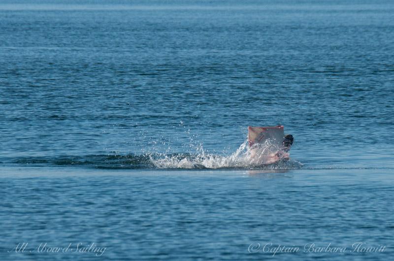 Sea lion eating Big Skate