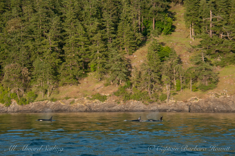 J Pod and Henry Island forest reflections