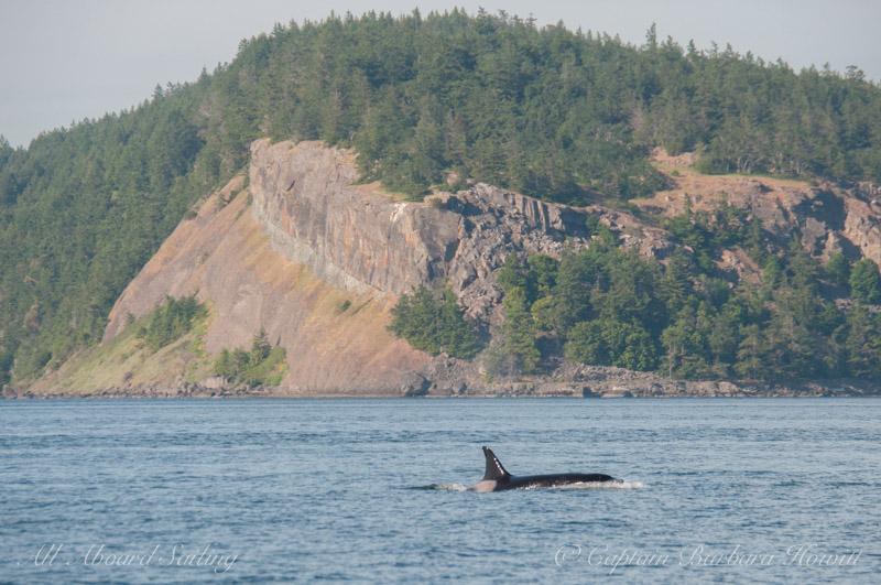 Orca passing Pt Disney, Waldron Island