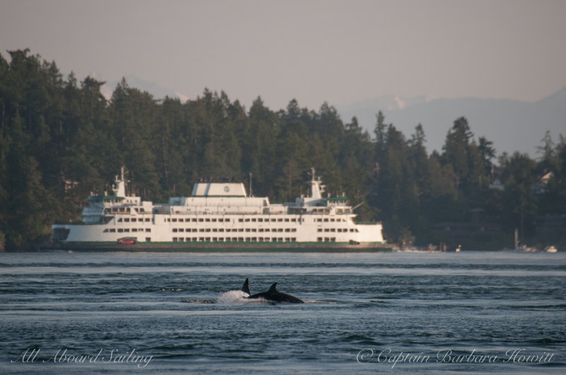 T124D with newest calf, T124D2, born approximately April 2017 with Washington State Ferry