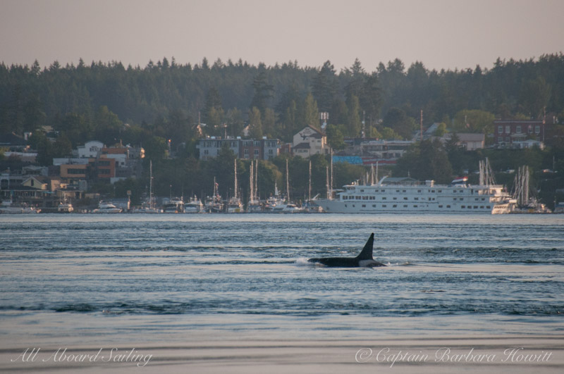 T87 passing The Whale Museum in Friday Harbor