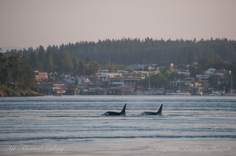 T77A and T87 passing Friday Harbor