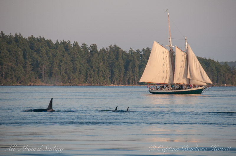 Transients passing Schooners North S/V Spike Africa
