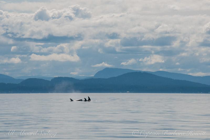 T65A's  Transient Orcas