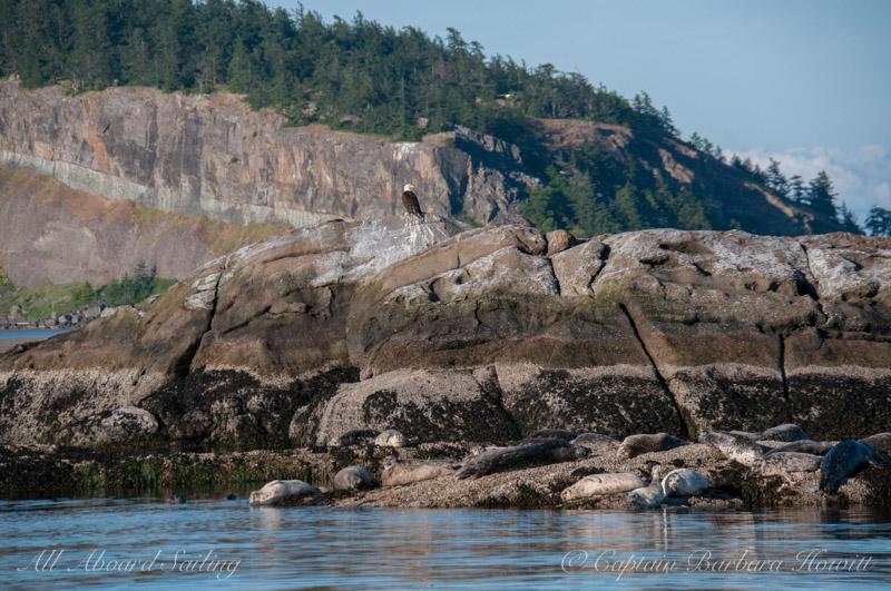 Bald eagle, harbor seals, and Pt Disney