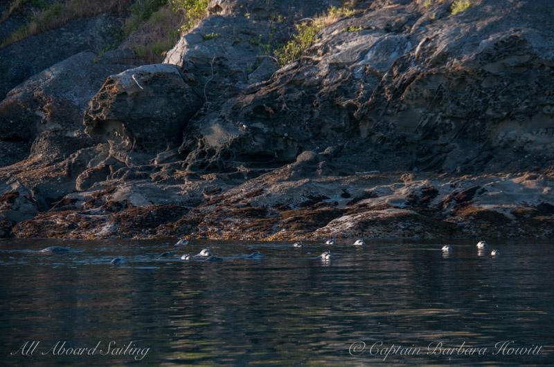 A gang of seals