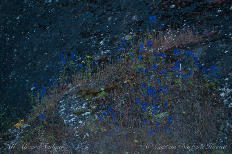 Cliffside wildflowers