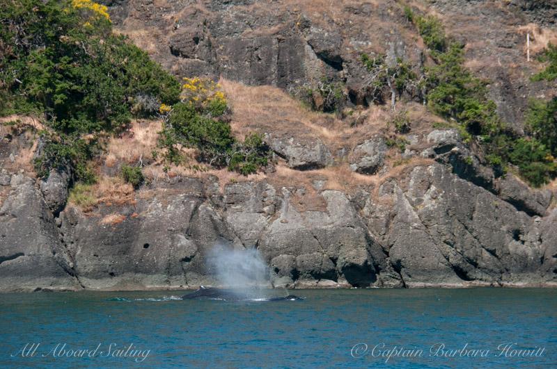 Humpbacks, N Pender Island