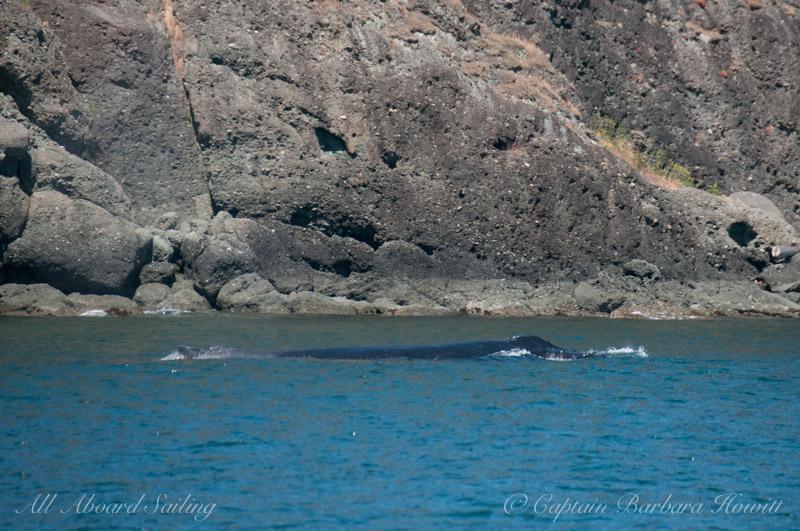 Humpback whale - N Pender Island