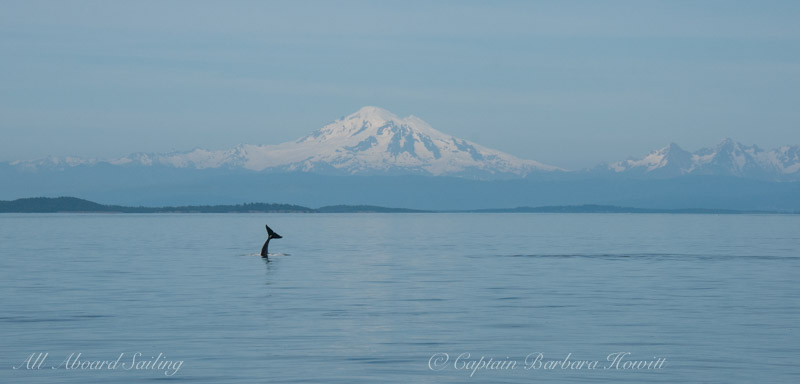 Orca headstand with Mt Baker