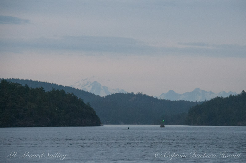T2C's milling by Shirt Tail Reef - Mt Baker in the distance