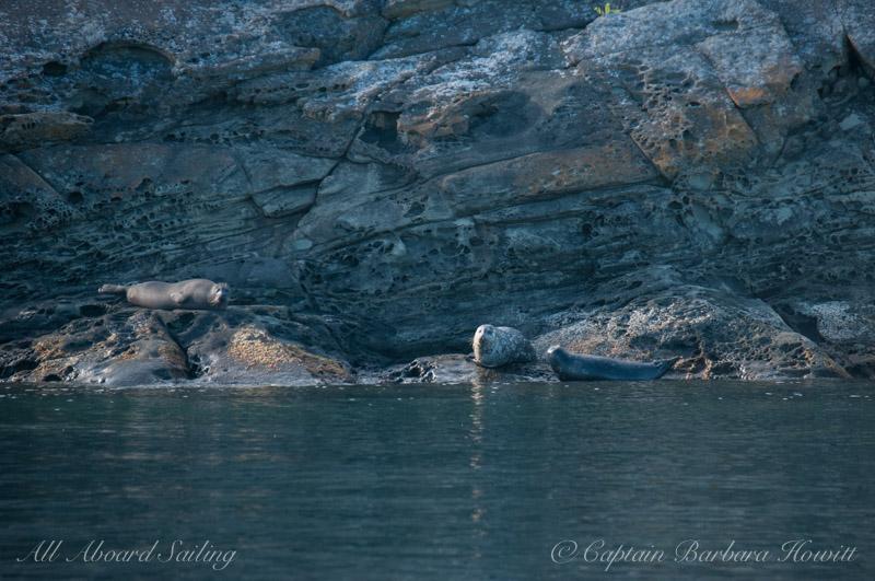 Harbor seals and honeycomb sandstone