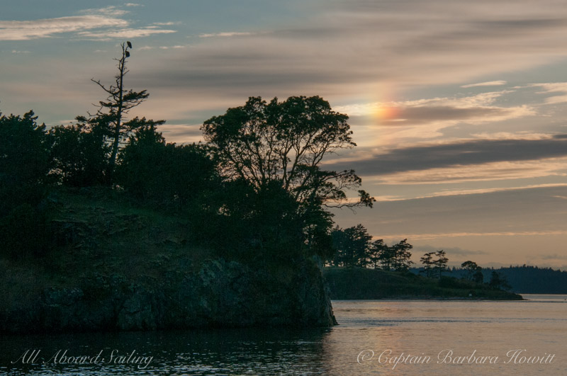 Pair of eagles on Nob Island with sun dog