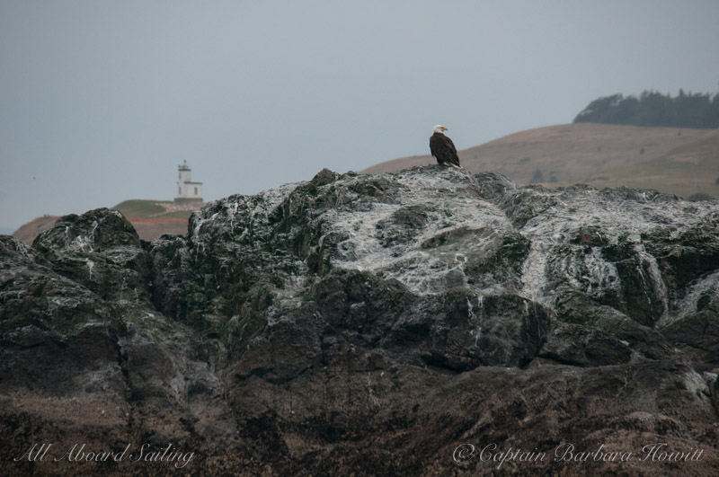 Bald Eagle and Cattle Point Lighthouse