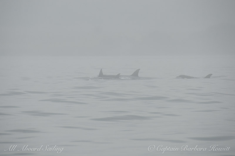 Transients in the fog - Haro Strait